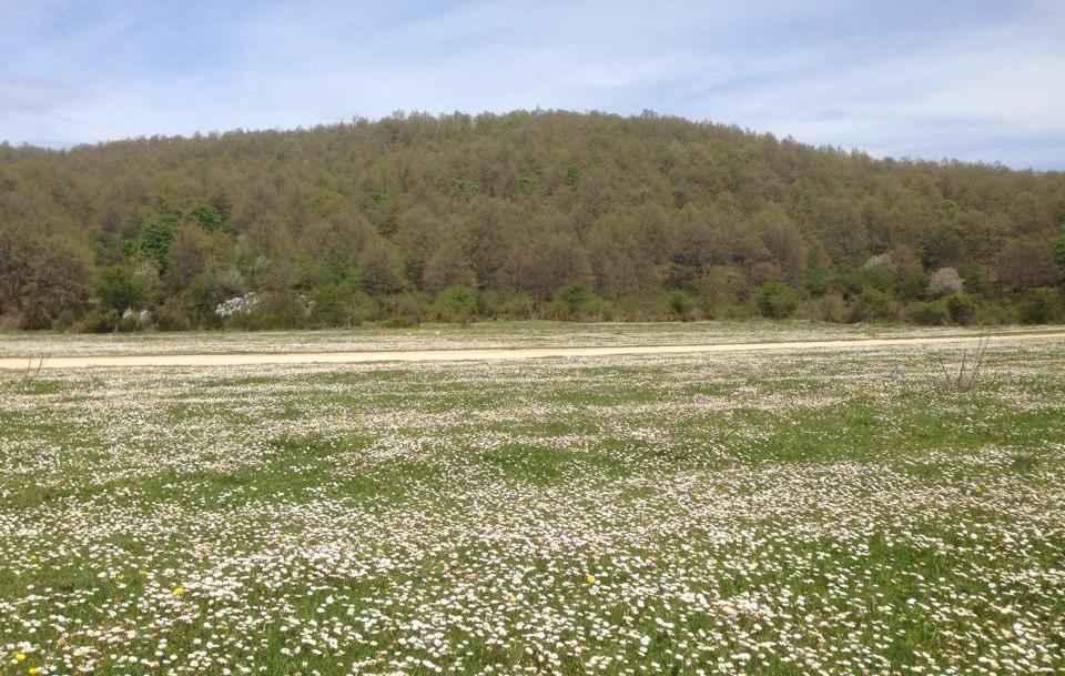 I Pradi di Stroncone in fiore (foto di Giuliano Galli)